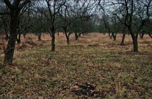 По факту кражи яблоневых садов в Воронеже в мае начнут судебное разбирательство
