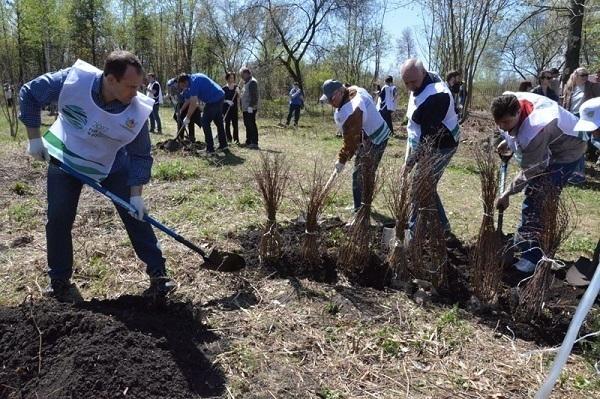 В рамках всероссийского экологического субботника в Воронеже был заложен «Зеленый амфитеатр» и «Аллея Года Экологии 2017»