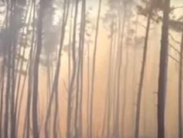 Под Воронежем 4 часа тушили природный пожар наплощади полутора гектаров