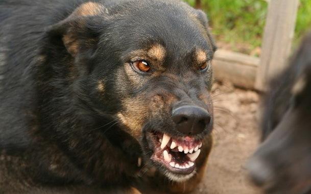 ВВоронежской области бешенством болеют как правило собаки икошки