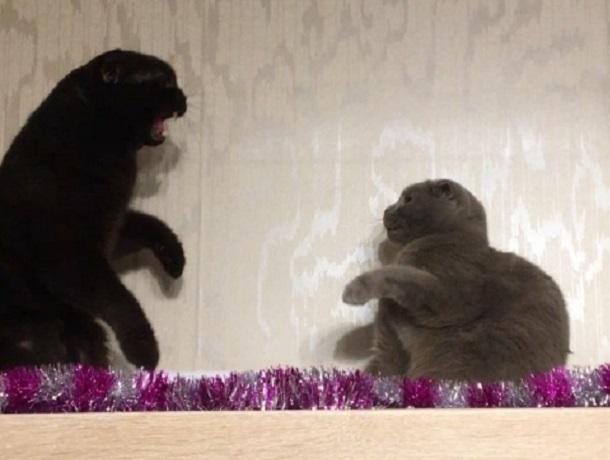 Вweb-сети появилось видео эпичной битвы британца с темным котом изВоронежа