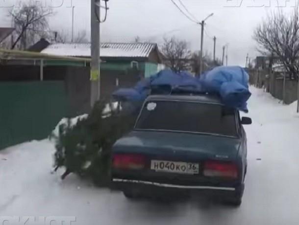 Гражданин села Лекарственные травы нелегально спилил 11 сосен вВоронежском заповеднике