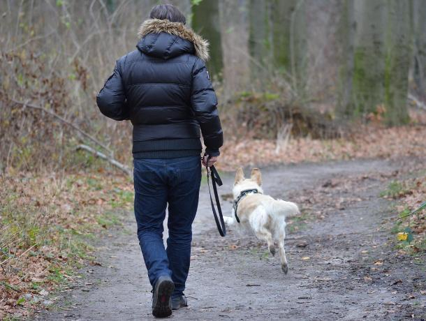 В Воронеже пес привел хозяина к телу пропавшей женщины