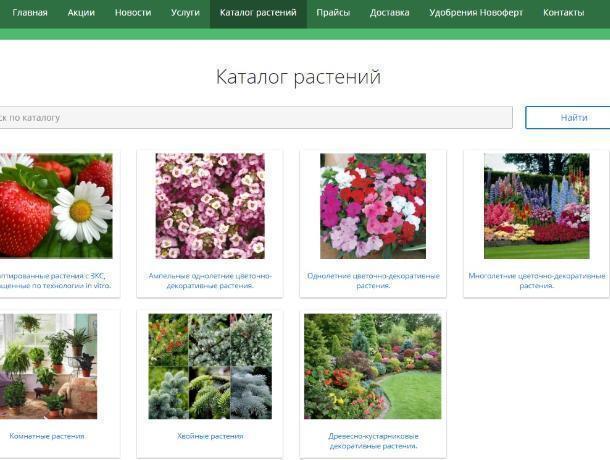 Воронежские «цветочные акции» распродают за 35 млн рублей