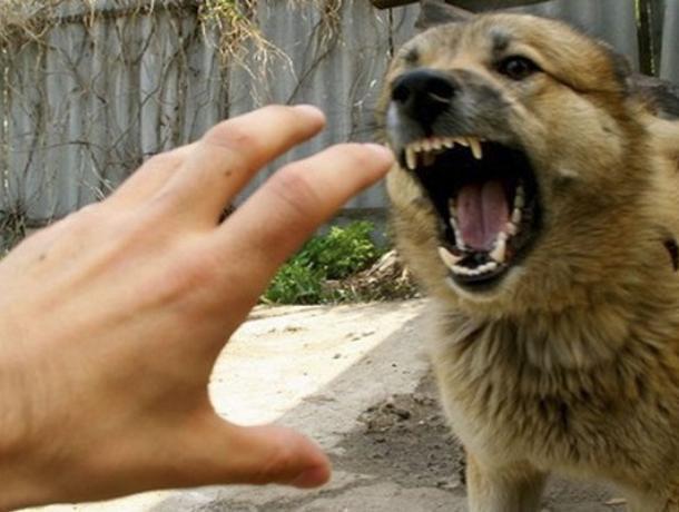 Село Казачка закрыто накарантин из-за бешеной собаки