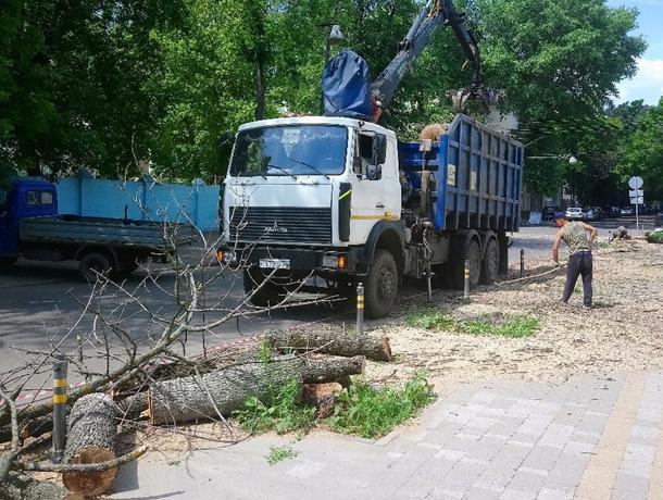 Из-за голодных жуков в центре Воронежа начали рубить деревья