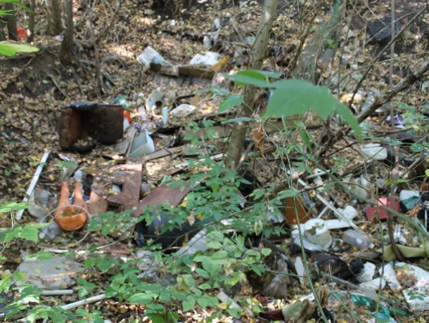 Власти Воронежа игнорируют кишащую крысами свалку в центре города