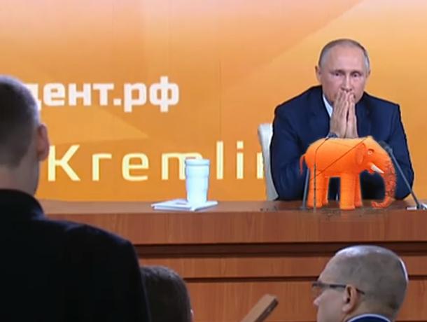 Вопрос Путину по заданию Гордеева, а воронежцы сходят с ума от оранжевого слона – ТОПка #5