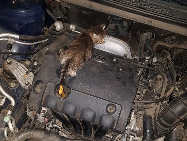 В Воронеже стая собак погрызла автомобиль из-за котят под капотом