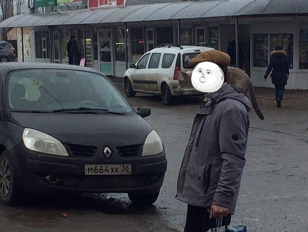 Мужчина, гуляющий с котом на плече, впечатлил воронежцев