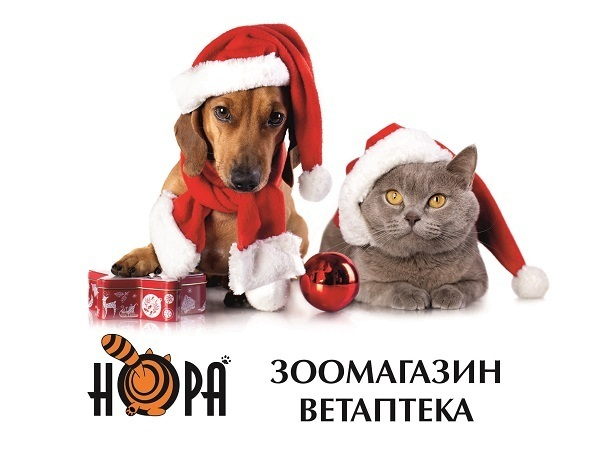 Новогодние подарки для ваших питомцев в сети зоомагазинов «НОРА»
