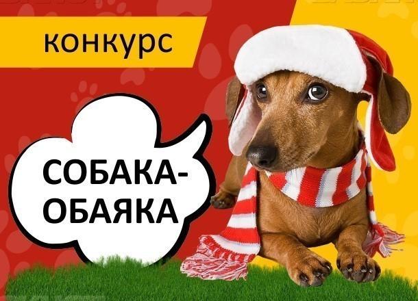Внимание! Завтра стартует голосование в конкурсе «Собака-обаяка»