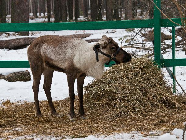 Воронежский зоопитомник «Червленый Яр» изменил график работы