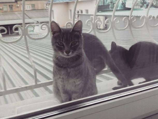 Коты с дьявольским взглядом напугали жительницу Воронежа