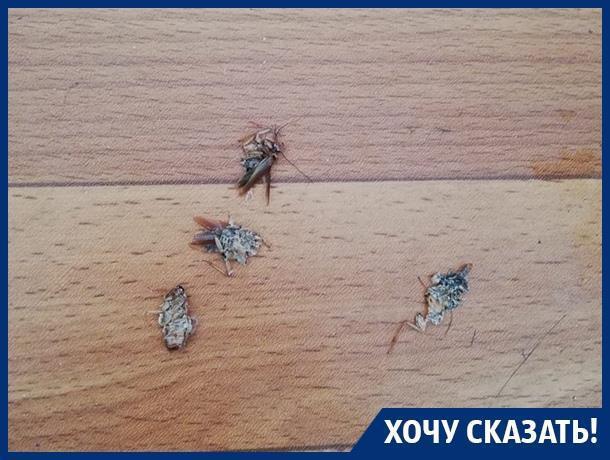 Наши дети лечатся по соседству с тараканами, - жительница Воронежа