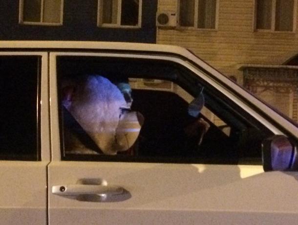 Идеального пассажира показали на фото воронежцам