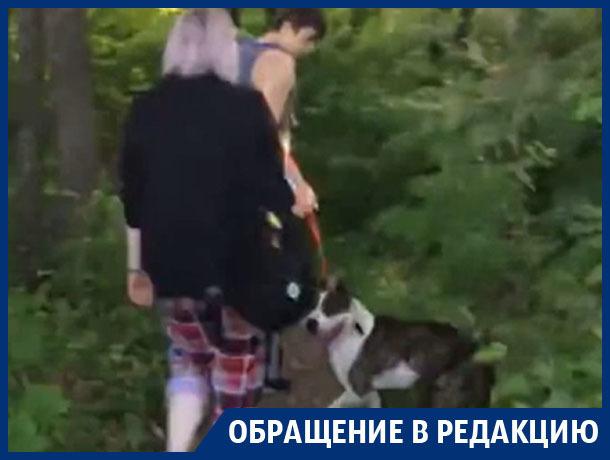 Бойцовская собака изуродовала щенка самоеда в Воронеже