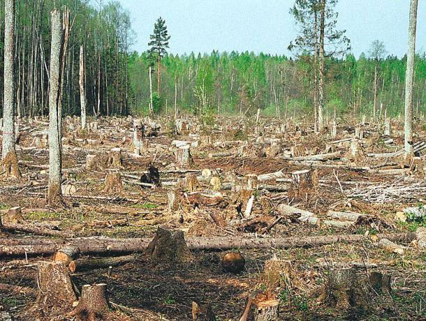 Самое популярное экологическое преступление назвали воронежские прокуроры