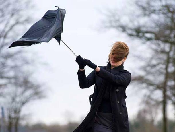 ВВоронежской области объявили желтый уровень опасности из-за ветра 1декабря