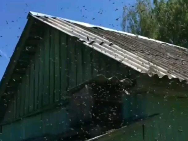 Наводящий ужас рой пчел показал на видео воронежец