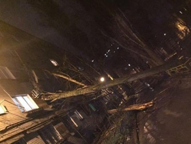 Ураган в Воронеже повалил деревья на детский сад, дома и машины