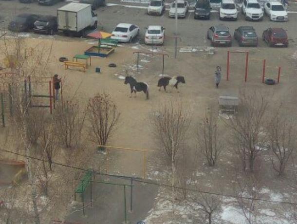 Сбежавшие от хозяина пони удивили жителей Воронежа