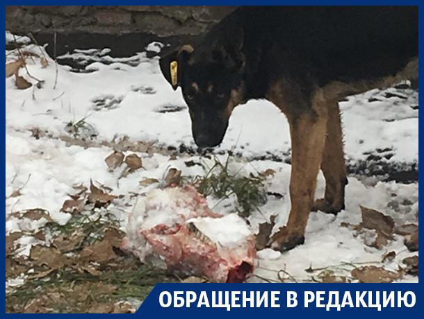 Расправа собаки с зубастой головой напугала жителей Воронежа