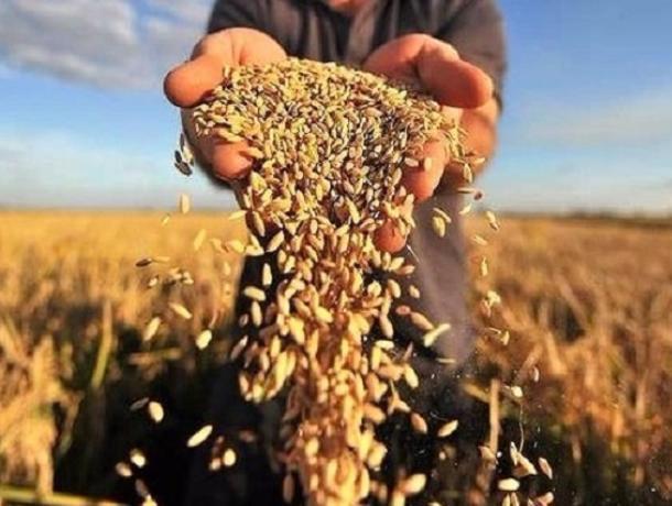 Воронежские аграрии получат 800 млн рублей от Правительства РФ