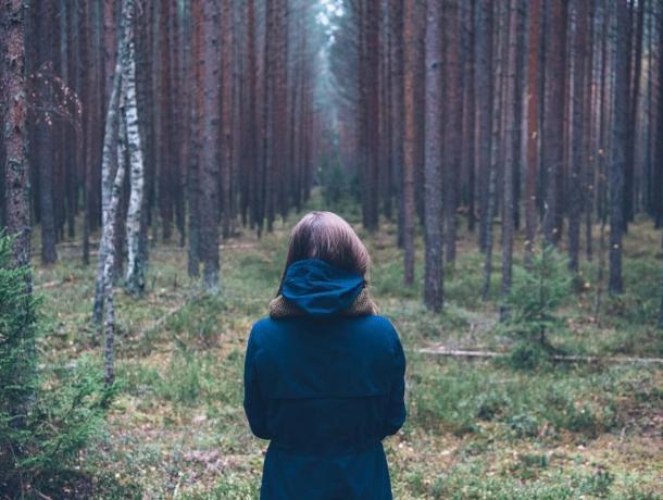 В лесу под Воронежем нашли потерявшихся девушек-грибников