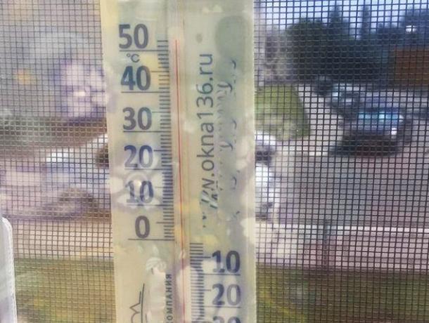Аномальную температуру воздуха зафиксировали воронежцы