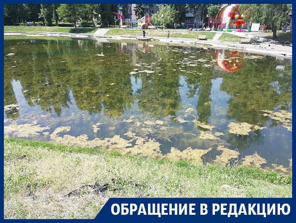 Неприглядное состояние Лебединого озера показали на фото в Воронеже