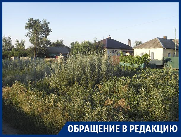Гигантские сорняки оккупировали село в Воронежской области