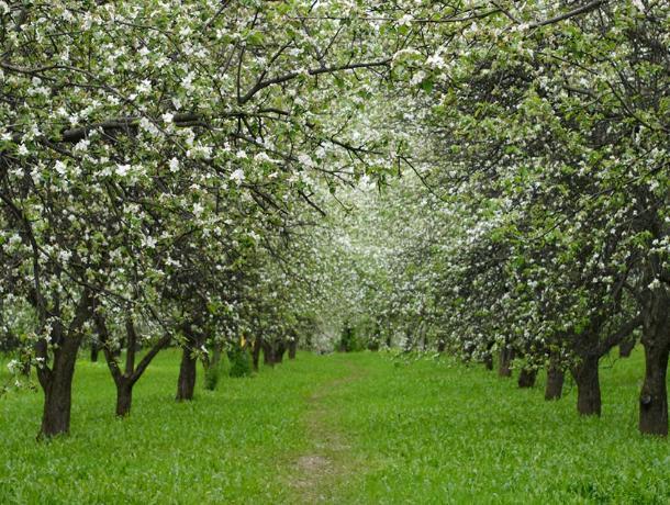 Воронежский арбитраж подтвердил законность изъятия участка яблоневого сада у ООО «Спартан»