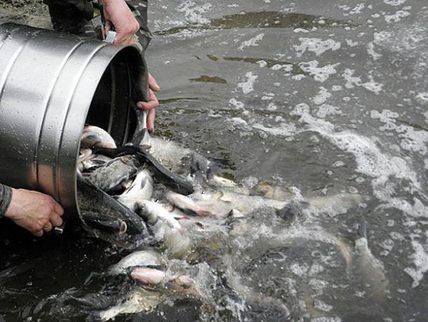 В Воронежском водохранилище появится рыба за 3 млн рублей