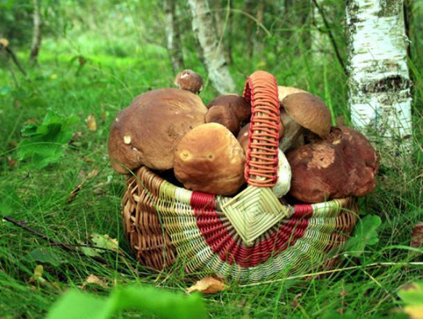 ВВоронежской области полицейские спасли заблудившуюся влесу женщину сребёнком
