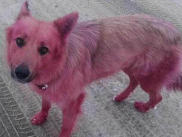 Розовый пес совершил дерзкий побег в Воронеже