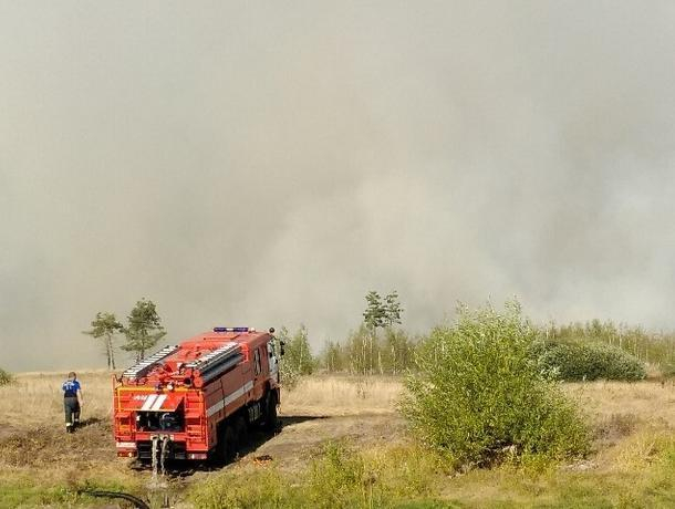 На окраине Воронежа  разбушевался крупный ландшафтный пожар