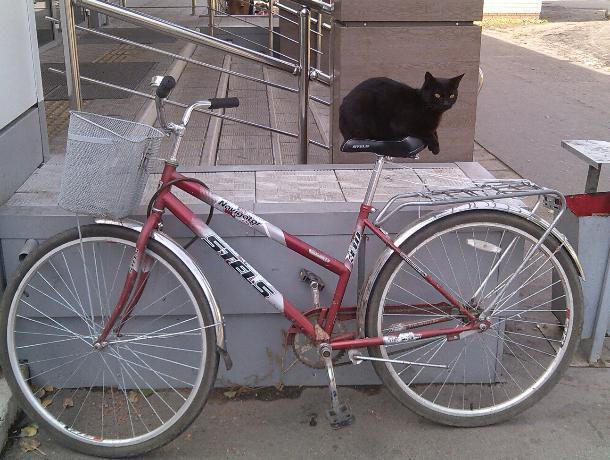 Черный кот-велосипедист попал на фото в Воронежской области