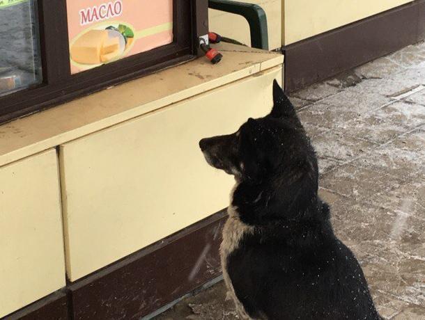 Воронежцы жестоко высмеяли грустный взгляд собаки-покупателя