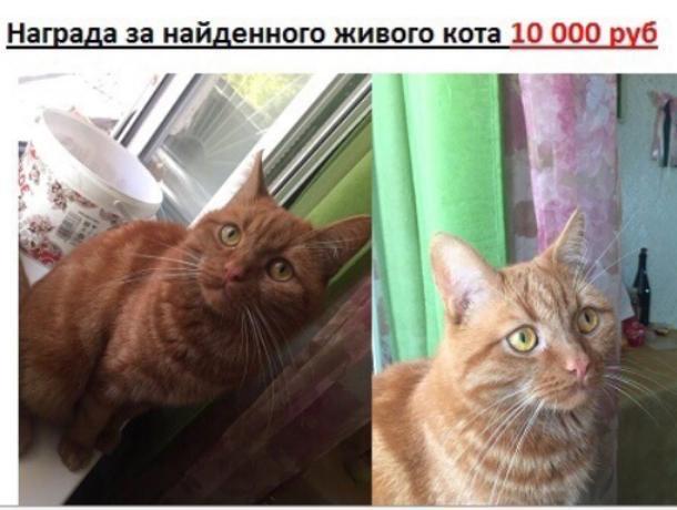 Награду 10 тыс рублей объявили за живого кота в Воронеже