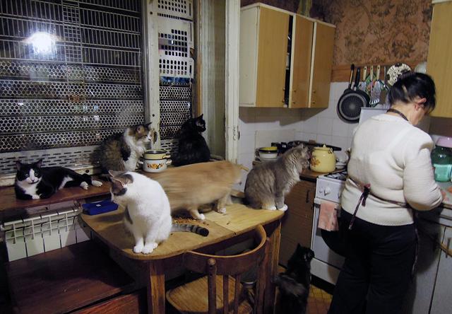 Приют котов в воронеже