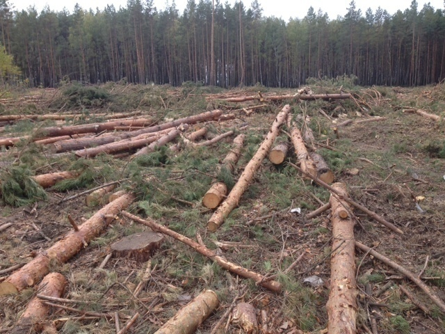 Деревенские сбежали в лес и потрахались фото 561-323