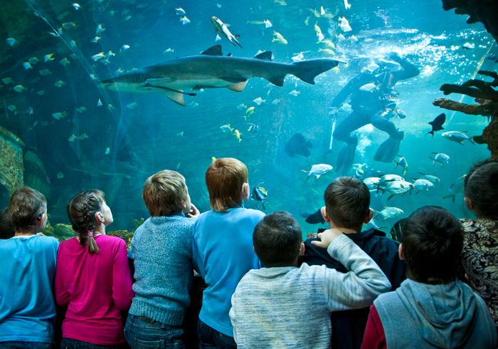 Воронежские школьники могут узнать тайны подводного мира