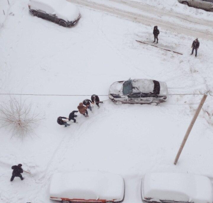 Воронежцы высмеяли современную «Репку» в одном из местных дворов