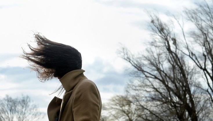 В Воронеже объявлен желтый уровень опасности из-за сильного ветра