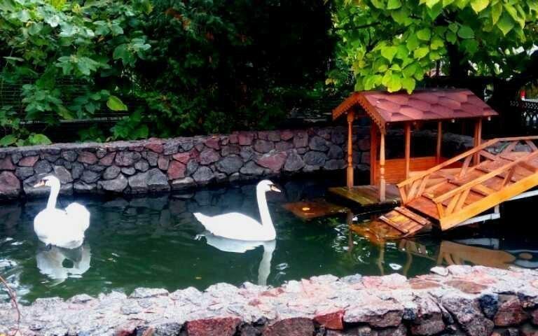 Пара лебедей поселилась назимовку вВоронежском зоопарке