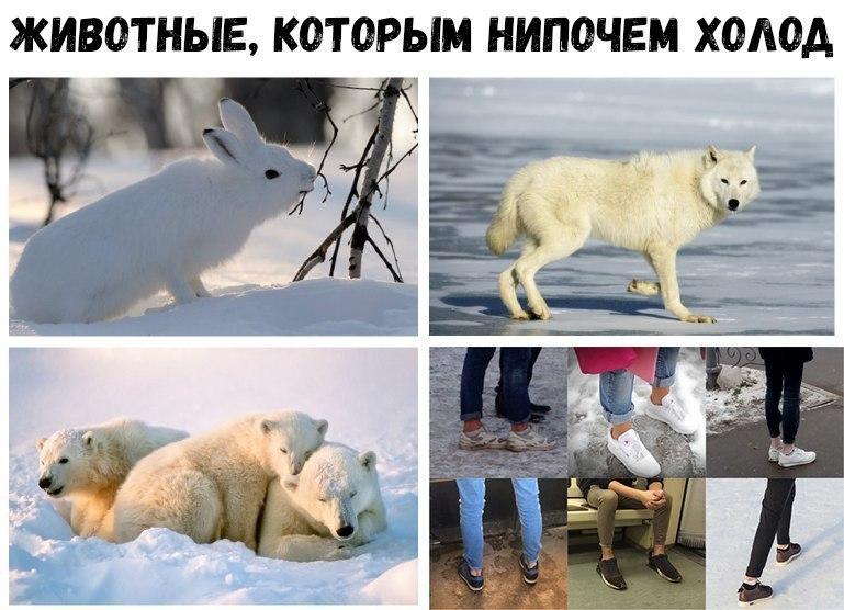 В Воронеже людей с подворотами сравнили с животными