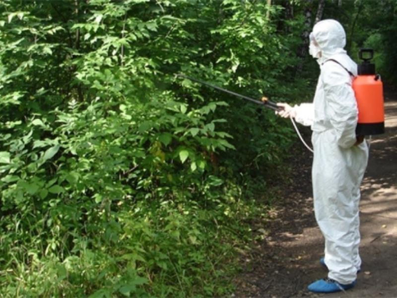 Воронежцам посоветовали отказаться от похода в парки