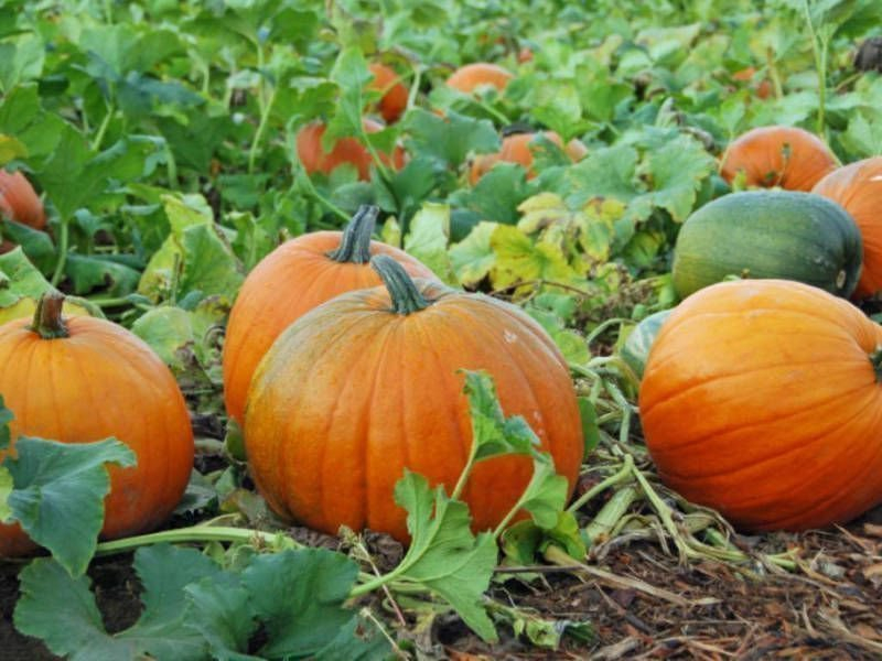 В Воронеже рассказали, каким будет первое органическое производство в регионе