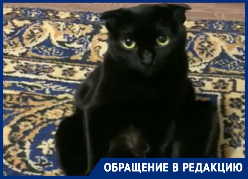 Забавную депрессию кота-вислоуха из-за ковра сняли в Воронеже